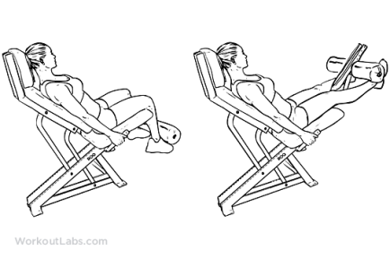 Seated_Machine_Leg_Extensions_F_WorkoutLabs